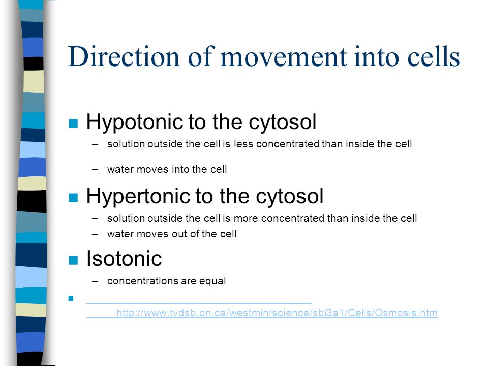 Direction of movement into cells n Hypotonic to the cytosol –solution outside the cell is less concentrated than inside the cell –water moves into the cell n Hypertonic to the cytosol –solution outside the cell is more concentrated than inside the cell –water moves out of the cell n Isotonic –concentrations are equal n