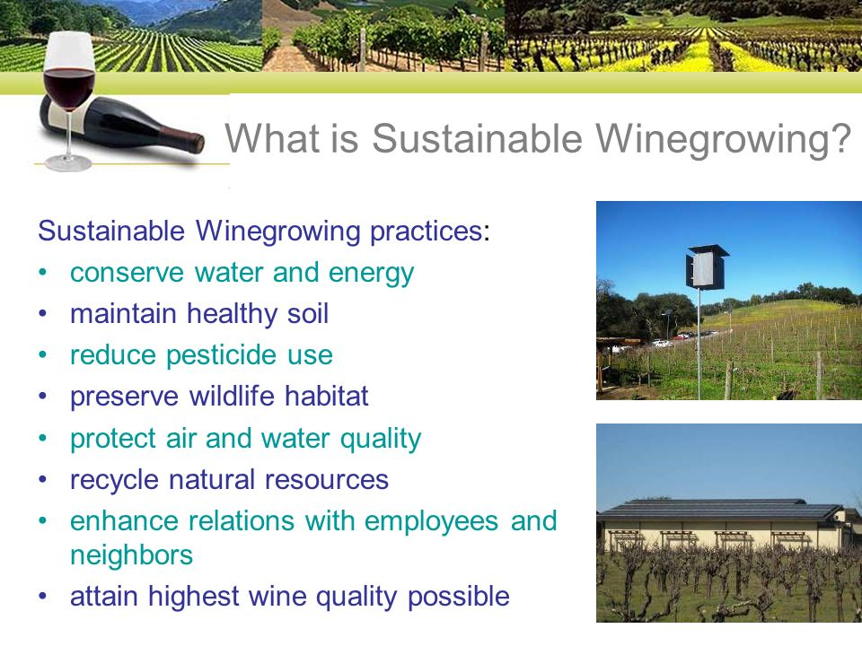 What is Sustainable Winegrowing.