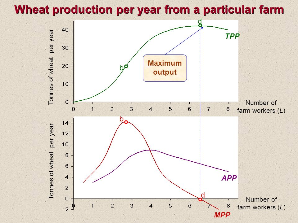 Wheat production per year from a particular farm Tonnes of wheat per year TPP Tonnes of wheat per year APP MPP b d d Number of farm workers (L) Number of farm workers (L) Maximum output b
