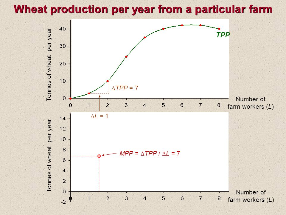 Wheat production per year from a particular farm Number of farm workers (L) Tonnes of wheat per year TPP Tonnes of wheat per year Number of farm workers (L) TPP = 7 L = 1 MPP = TPP / L = 7