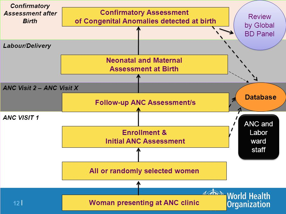 12 | Woman presenting at ANC clinic All or randomly selected women Enrollment & Initial ANC Assessment ANC VISIT 1 ANC Visit 2 – ANC Visit X Follow-up ANC Assessment/s Labour/Delivery Neonatal and Maternal Assessment at Birth Confirmatory Assessment of Congenital Anomalies detected at birth Database Confirmatory Assessment after Birth Review by Global BD Panel ANC and Labor ward staff