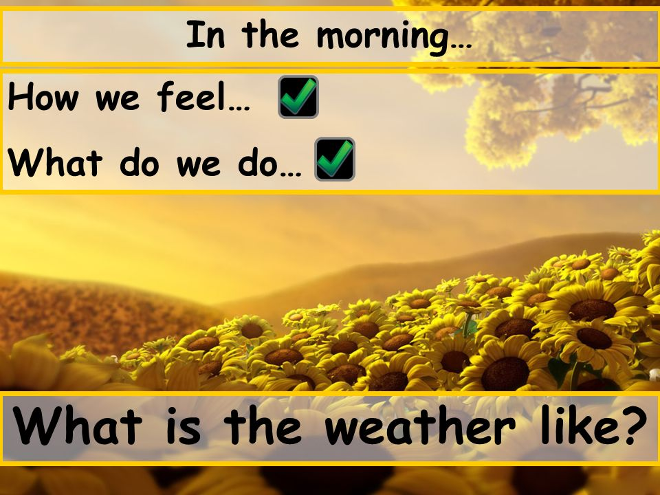 In the morning… How we feel… What do we do… What is the weather like