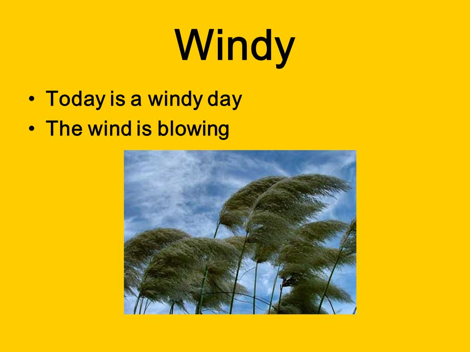 Windy Today is a windy day The wind is blowing