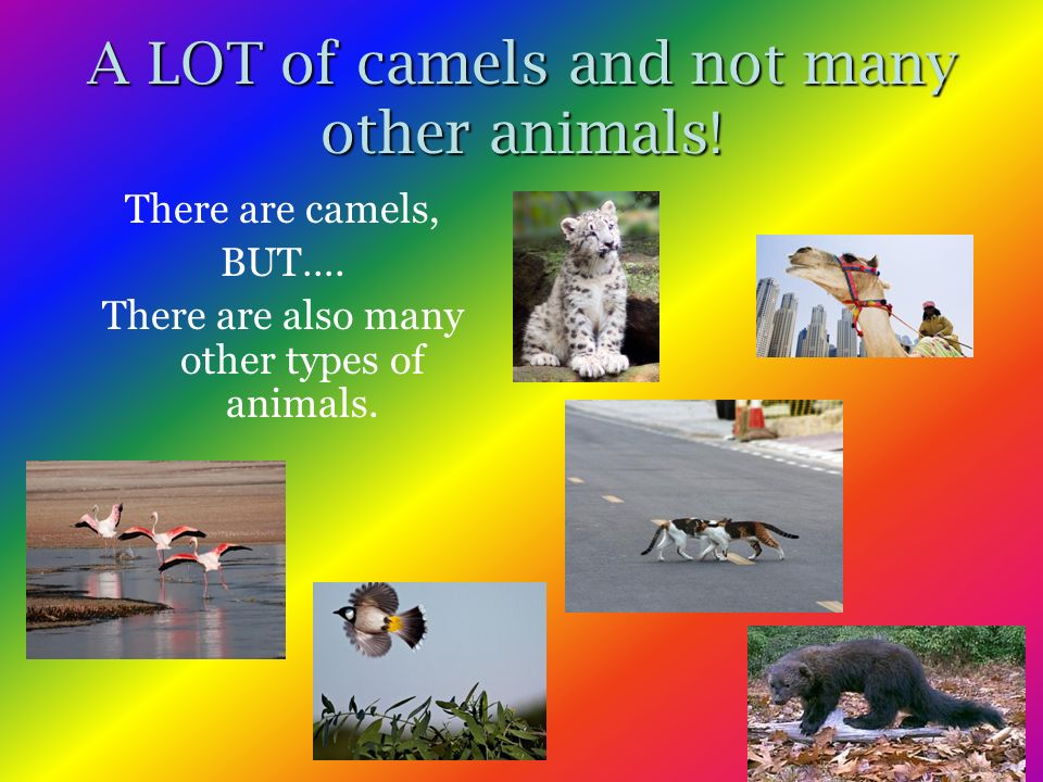 A LOT of camels and not many other animals. There are camels, BUT….