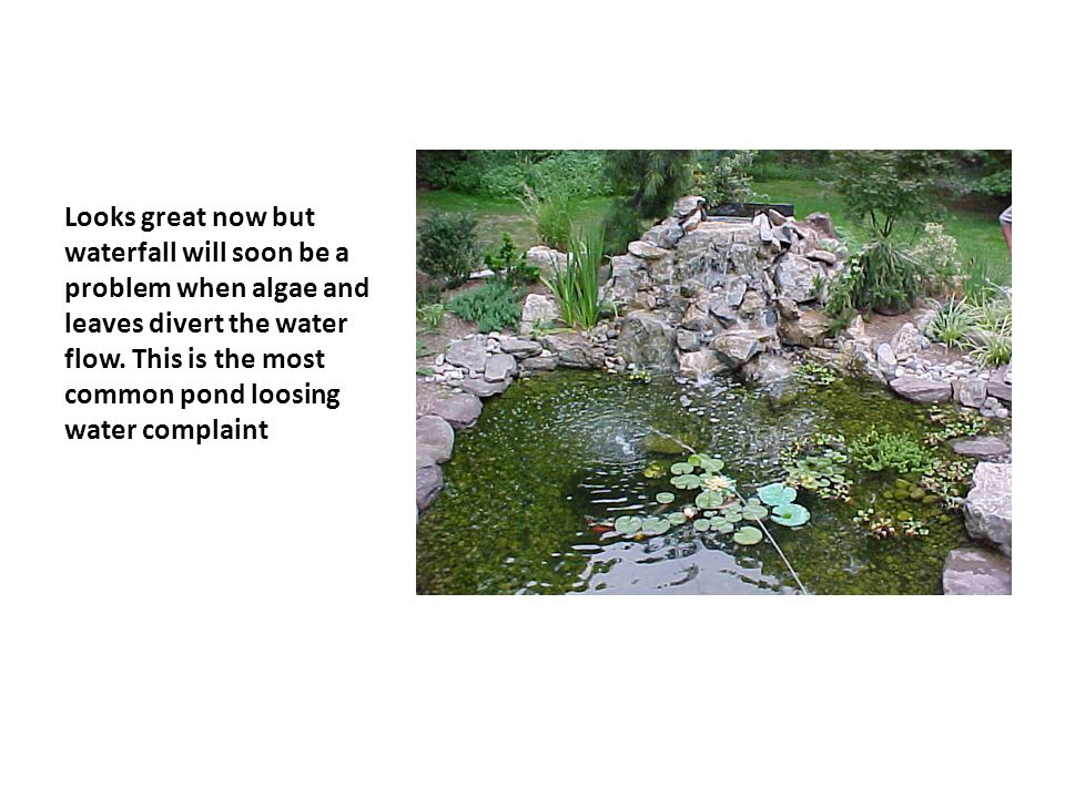 Looks great now but waterfall will soon be a problem when algae and leaves divert the water flow.
