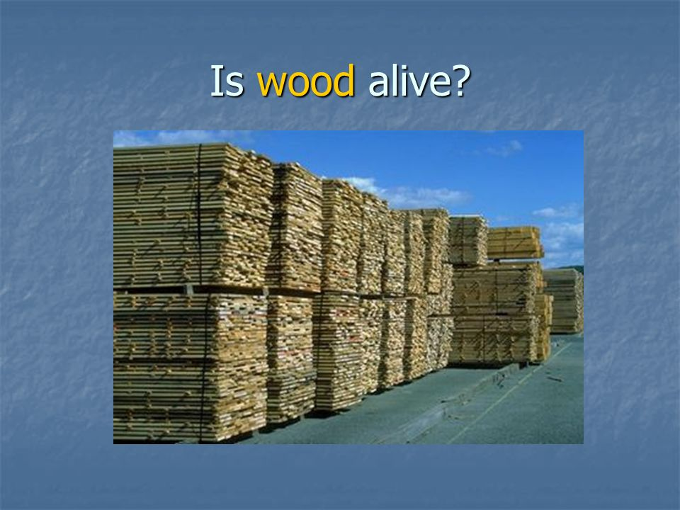 Is wood alive