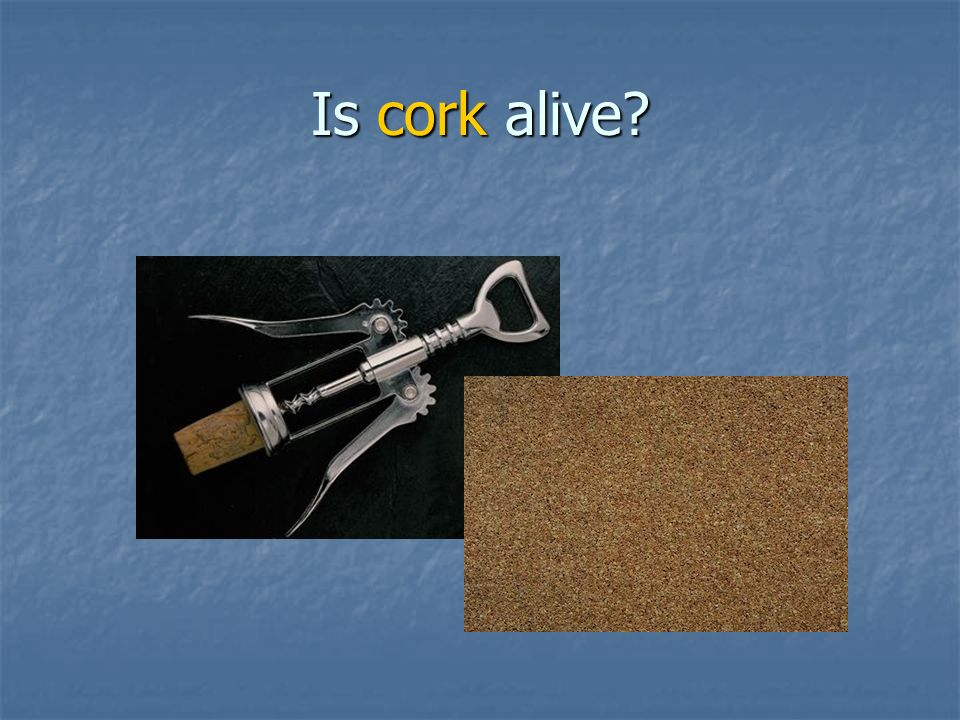 Is cork alive