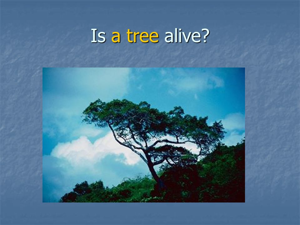 Is a tree alive