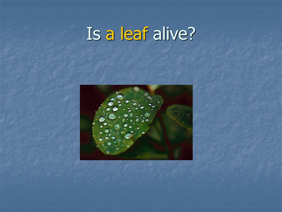 Is a leaf alive