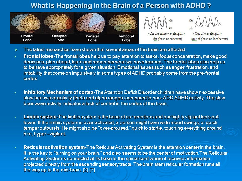 What is Happening in the Brain of a Person with ADHD .