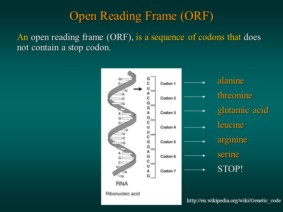 An open reading frame (ORF), is a sequence of codons that does not contain a stop codon.