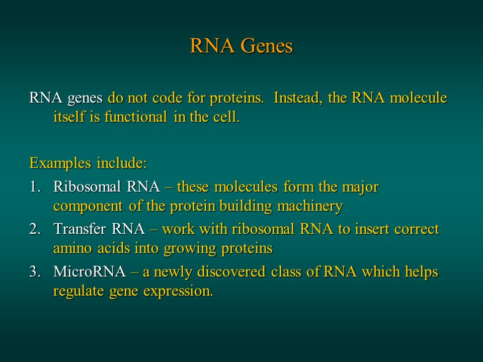 RNA Genes RNA genes do not code for proteins.