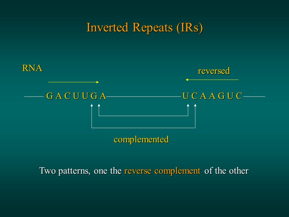 Inverted Repeats (IRs) RNA G A C U U G A U C A A G U C G A C U U G A U C A A G U C complemented reversed Two patterns, one the reverse complement of the other