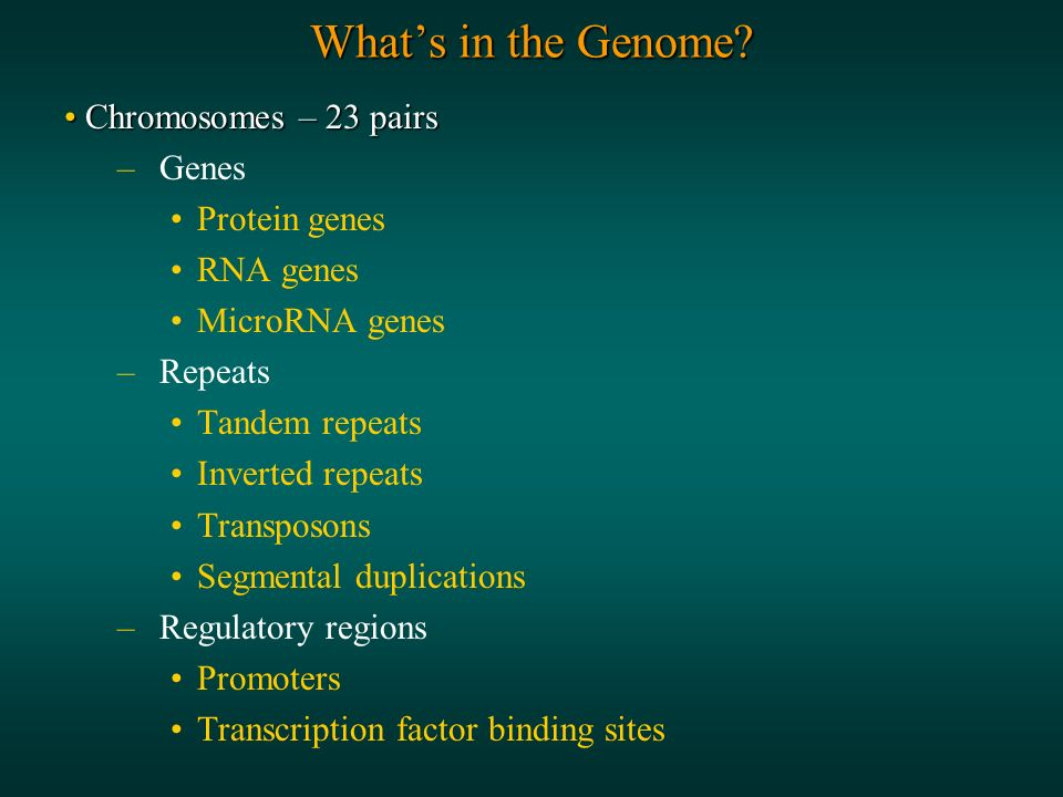 Whats in the Genome.