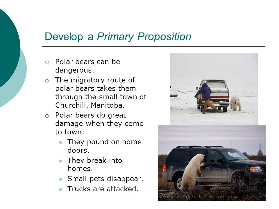 Develop a Primary Proposition Polar bears can be dangerous.