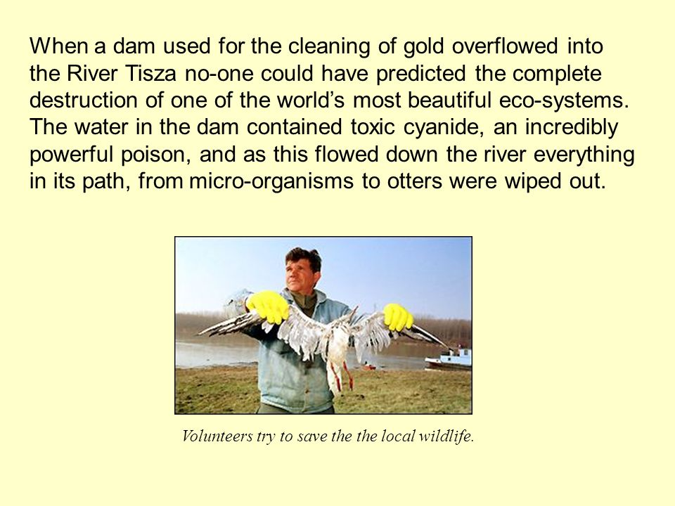 When a dam used for the cleaning of gold overflowed into the River Tisza no-one could have predicted the complete destruction of one of the worlds most beautiful eco-systems.