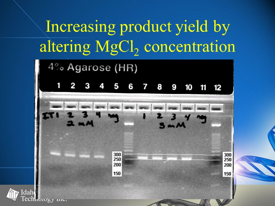 Increasing product yield by altering MgCl 2 concentration