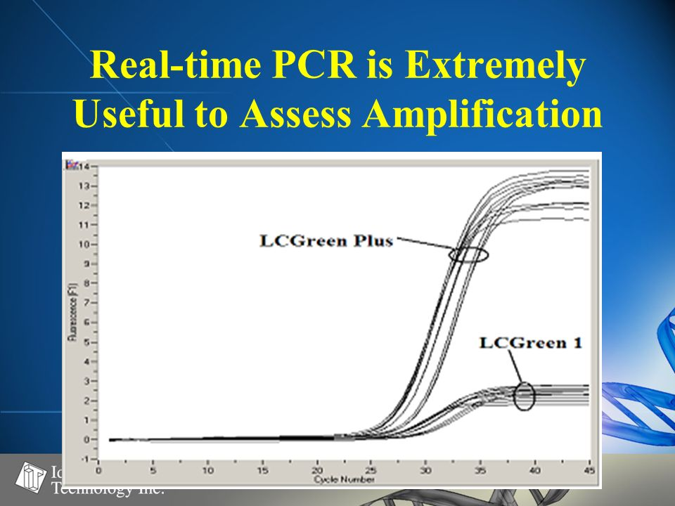 Real-time PCR is Extremely Useful to Assess Amplification