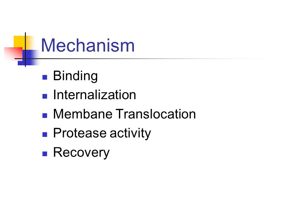 Mechanism Binding Internalization Membane Translocation Protease activity Recovery