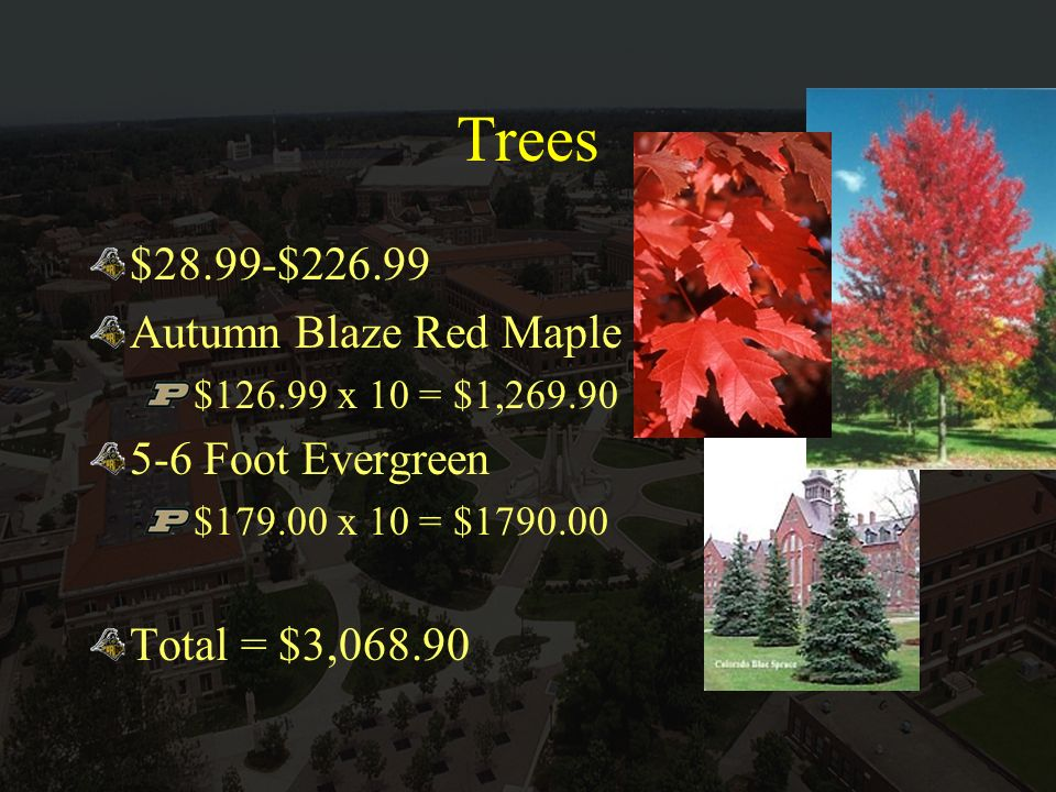 Trees $28.99-$226.99 Autumn Blaze Red Maple $126.99 x 10 = $1,269.90 5-6 Foot Evergreen $179.00 x 10 = $1790.00 Total = $3,068.90