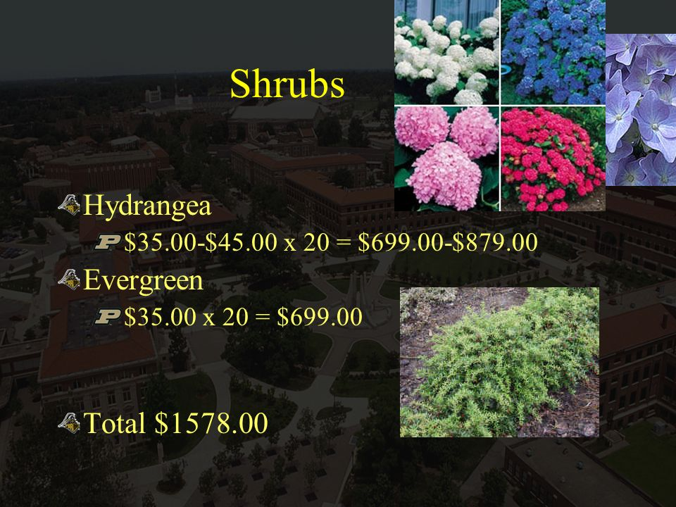 Shrubs Hydrangea $35.00-$45.00 x 20 = $699.00-$879.00 Evergreen $35.00 x 20 = $699.00 Total $1578.00