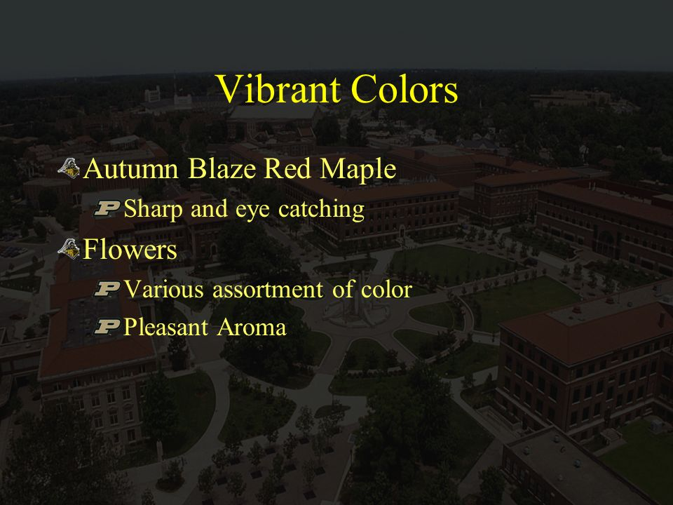 Vibrant Colors Autumn Blaze Red Maple Sharp and eye catching Flowers Various assortment of color Pleasant Aroma