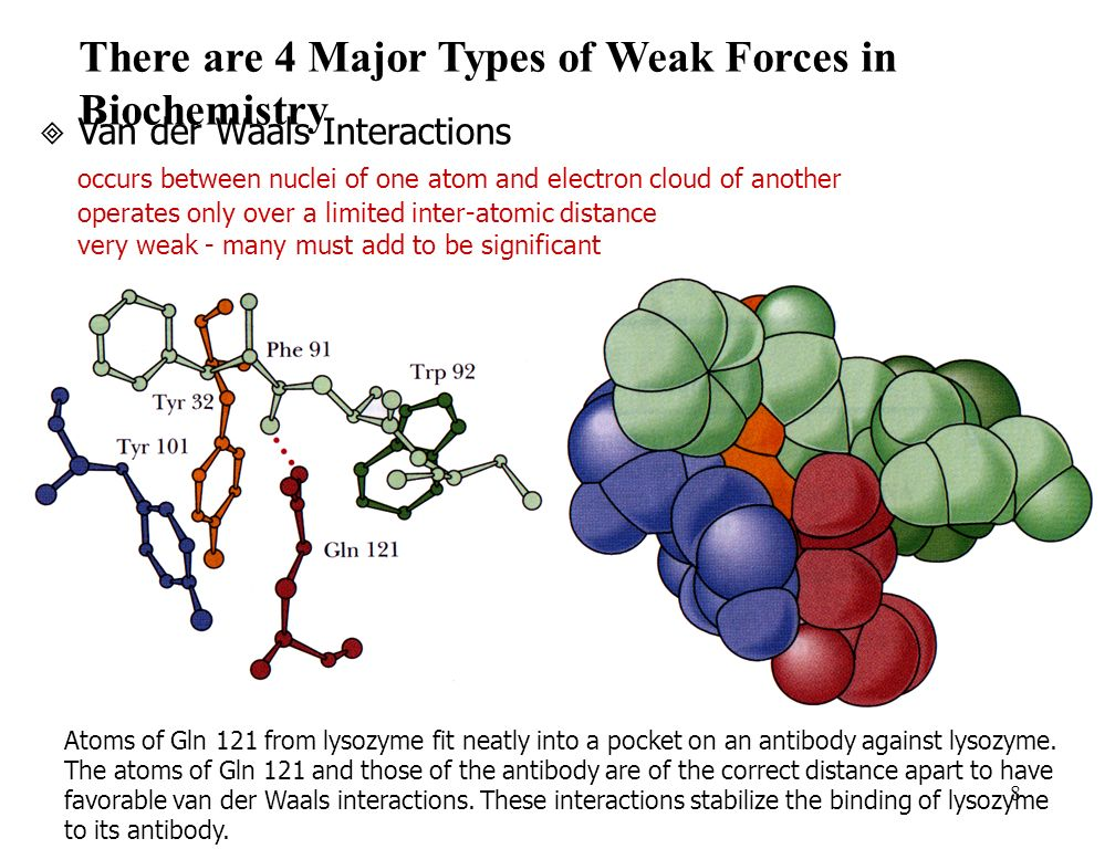 8 There are 4 Major Types of Weak Forces in Biochemistry Van der Waals Interactions occurs between nuclei of one atom and electron cloud of another operates only over a limited inter-atomic distance very weak - many must add to be significant Atoms of Gln 121 from lysozyme fit neatly into a pocket on an antibody against lysozyme.