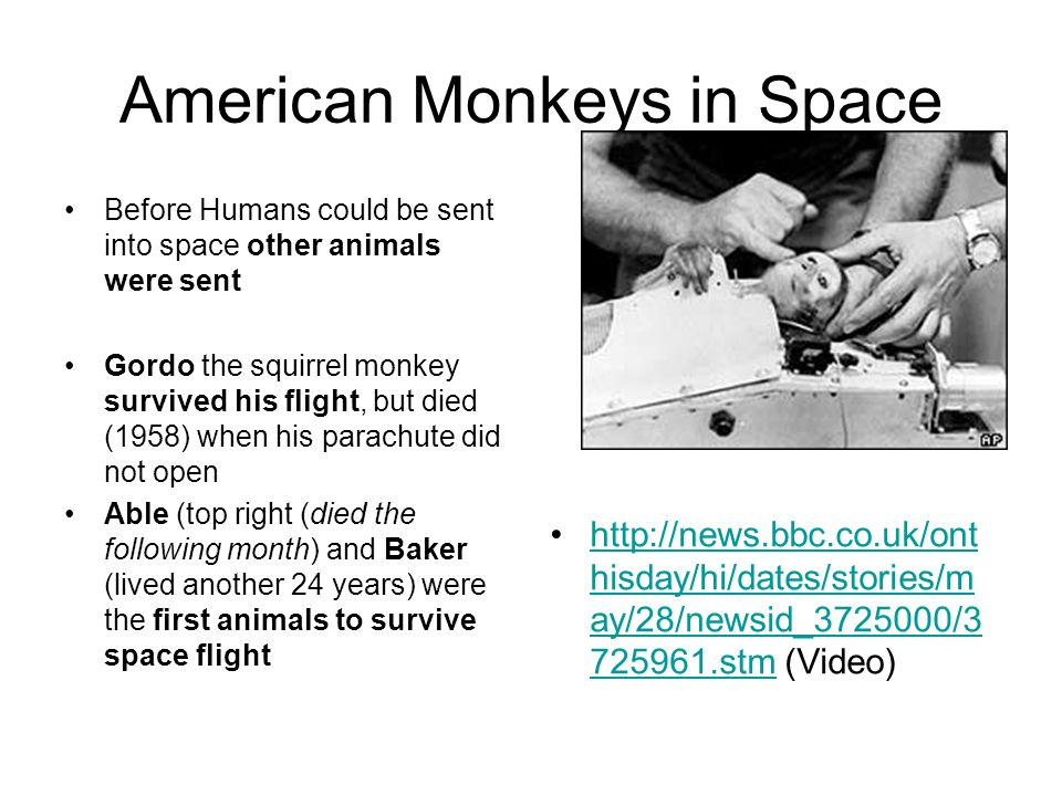 American Monkeys in Space Before Humans could be sent into space other animals were sent Gordo the squirrel monkey survived his flight, but died (1958) when his parachute did not open Able (top right (died the following month) and Baker (lived another 24 years) were the first animals to survive space flight http://news.bbc.co.uk/ont hisday/hi/dates/stories/m ay/28/newsid_3725000/3 725961.stm (Video)http://news.bbc.co.uk/ont hisday/hi/dates/stories/m ay/28/newsid_3725000/3 725961.stm