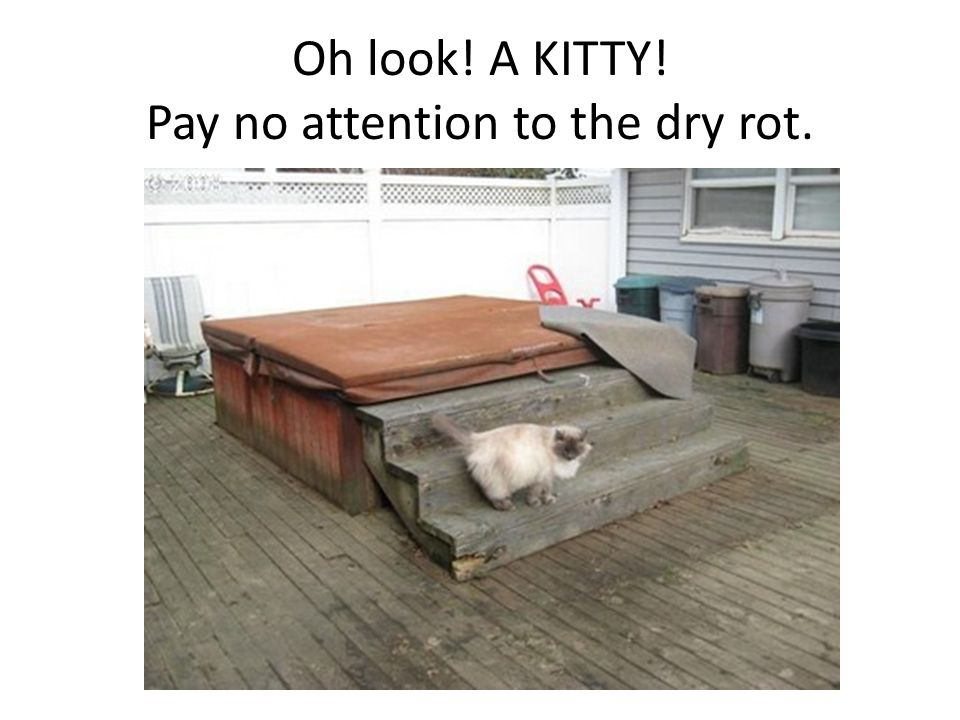 Oh look! A KITTY! Pay no attention to the dry rot.
