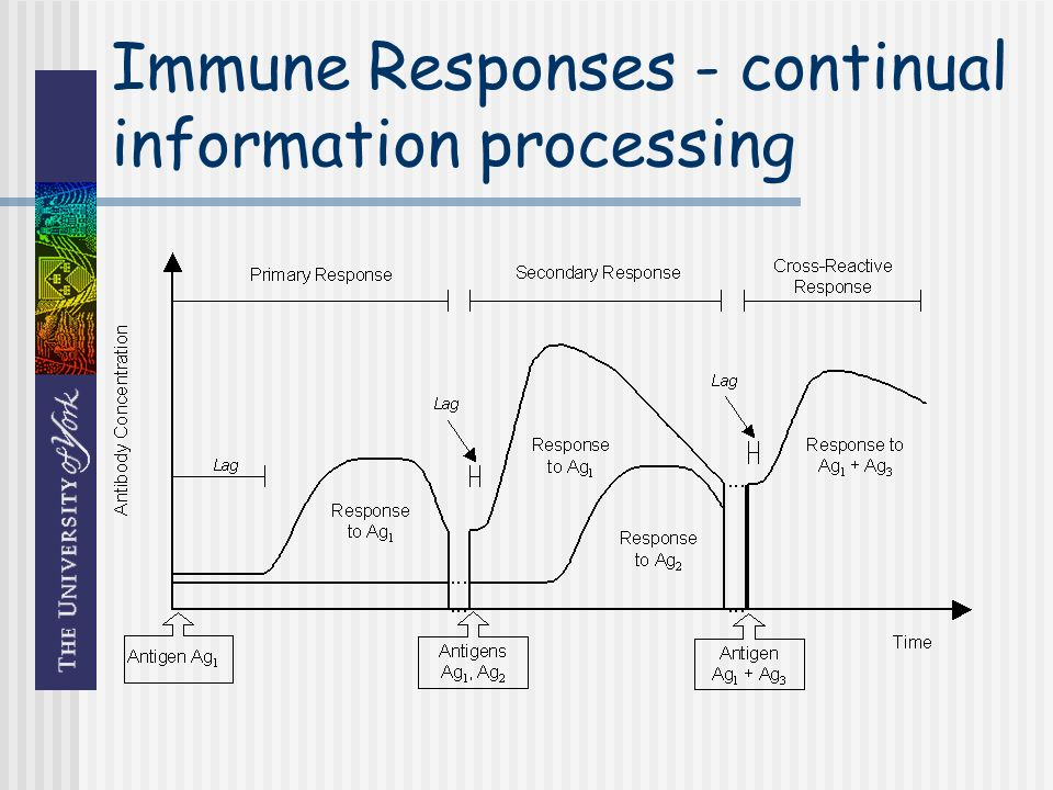 Immune Responses - continual information processing
