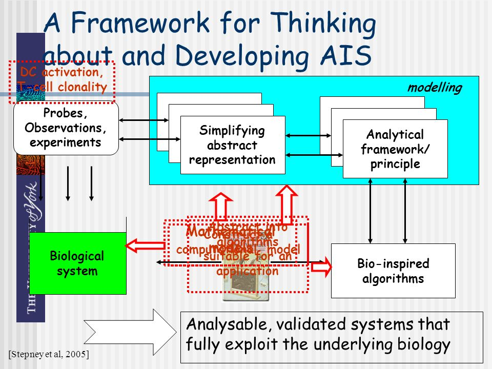 modelling Analytical framework/ principle A Framework for Thinking about and Developing AIS Biological system Simplifying abstract representation Bio-inspired algorithms Probes, Observations, experiments DC activation, T-cell clonality Mathematical models Construct a computational model Abstract into algorithms suitable for an application Analysable, validated systems that fully exploit the underlying biology [Stepney et al, 2005]