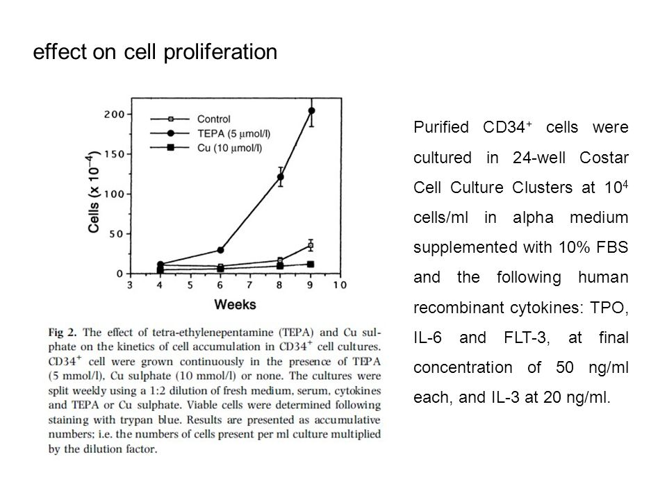 effect on cell proliferation Purified CD34 + cells were cultured in 24-well Costar Cell Culture Clusters at 10 4 cells/ml in alpha medium supplemented with 10% FBS and the following human recombinant cytokines: TPO, IL-6 and FLT-3, at final concentration of 50 ng/ml each, and IL-3 at 20 ng/ml.