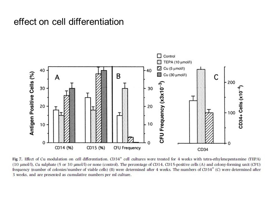 effect on cell differentiation