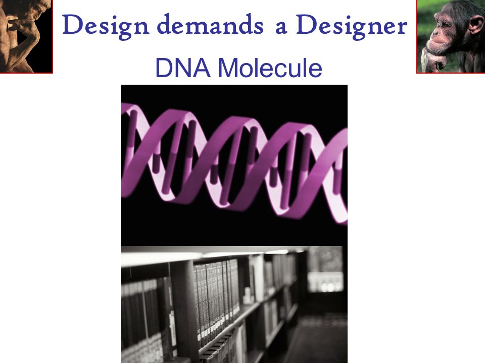 Design demands a Designer DNA Molecule