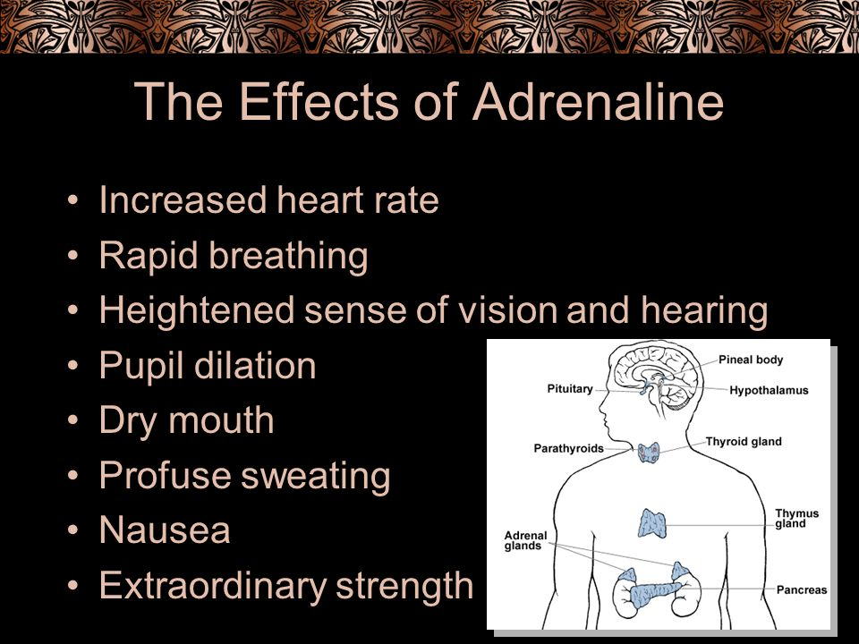 The Effects of Adrenaline Increased heart rate Rapid breathing Heightened sense of vision and hearing Pupil dilation Dry mouth Profuse sweating Nausea Extraordinary strength