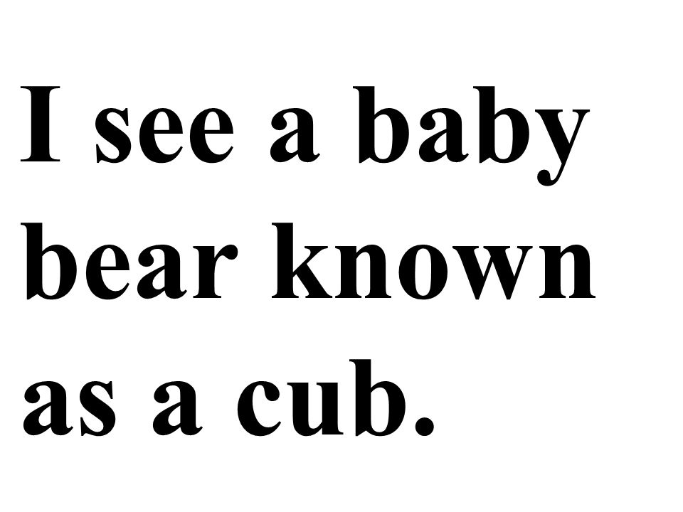 I see a baby bear known as a cub.