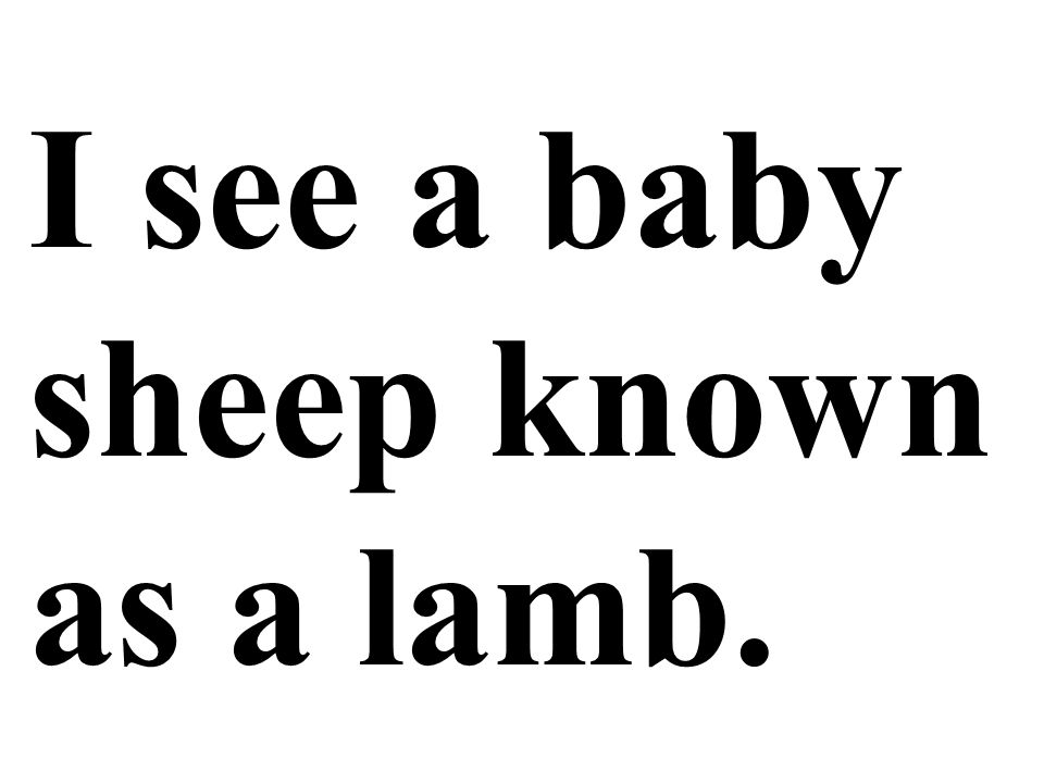 I see a baby sheep known as a lamb.