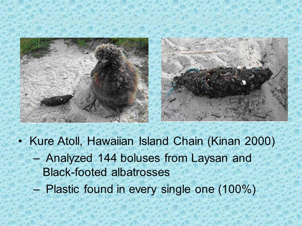 Analysis of Albatross Chick Boluses Kure Atoll, Hawaiian Island Chain (Kinan 2000) – Analyzed 144 boluses from Laysan and Black-footed albatrosses – Plastic found in every single one (100%)