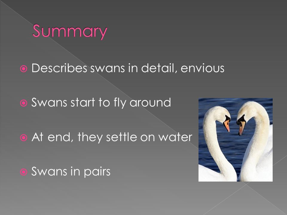 Describes swans in detail, envious Swans start to fly around At end, they settle on water Swans in pairs