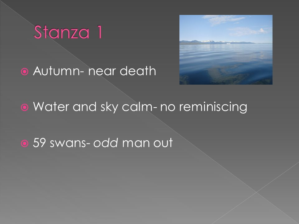 Autumn- near death Water and sky calm- no reminiscing 59 swans- odd man out