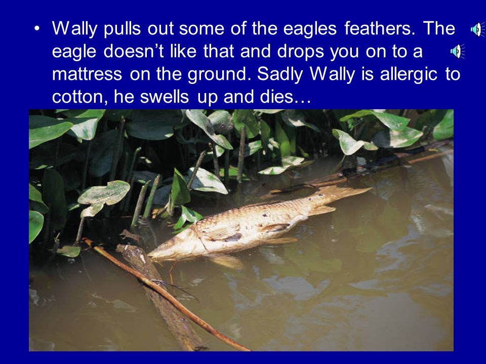 Wally lets go and falls onto a crocodile.