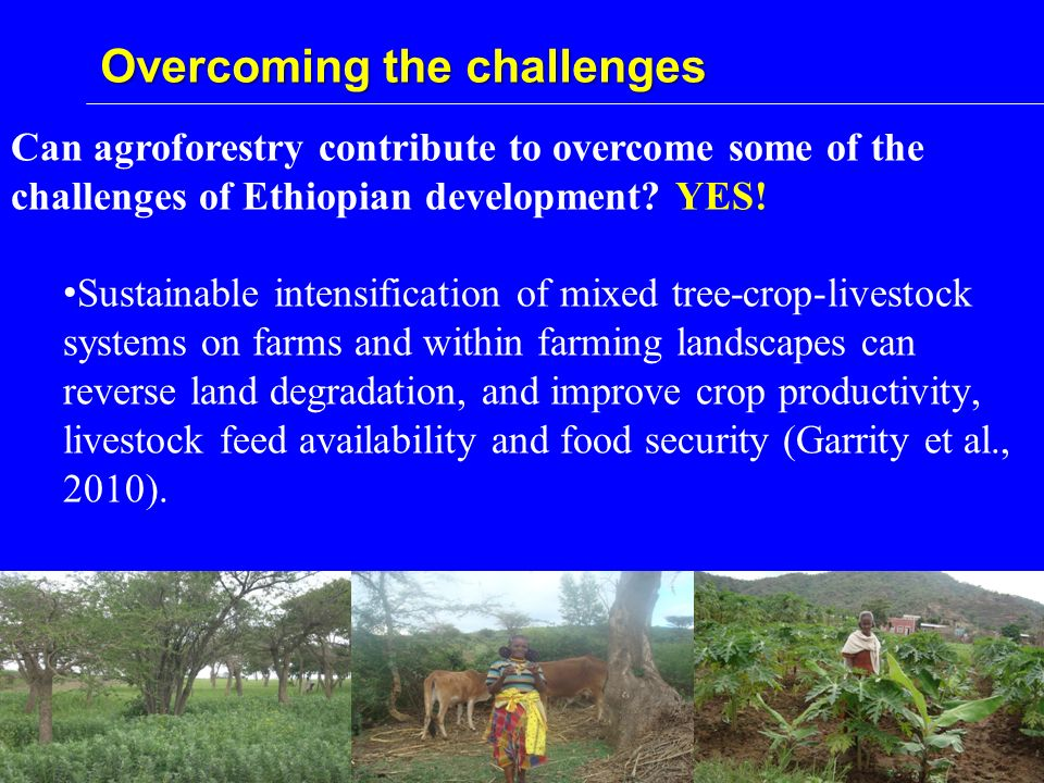 Overcoming the challenges Can agroforestry contribute to overcome some of the challenges of Ethiopian development.