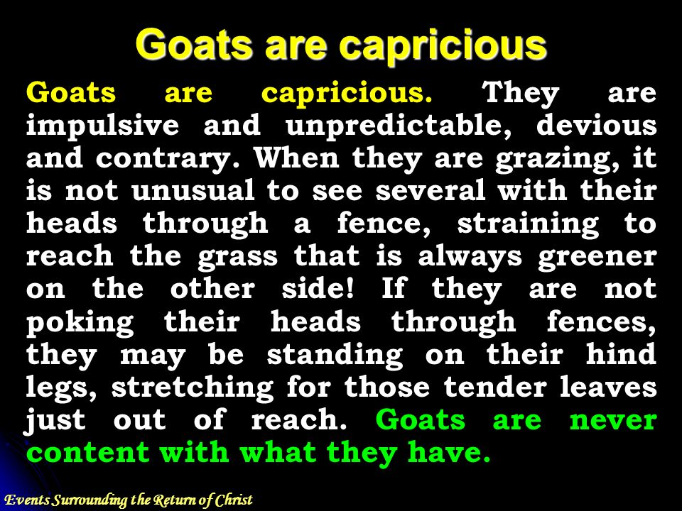 Events Surrounding the Return of Christ Goats are capricious Goats are capricious.