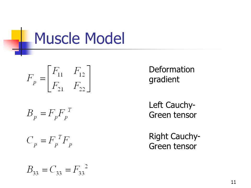 11 Muscle Model Deformation gradient Left Cauchy- Green tensor Right Cauchy- Green tensor