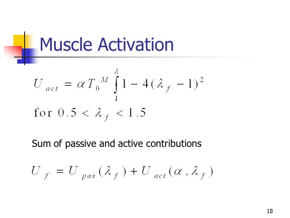 18 Muscle Activation Sum of passive and active contributions