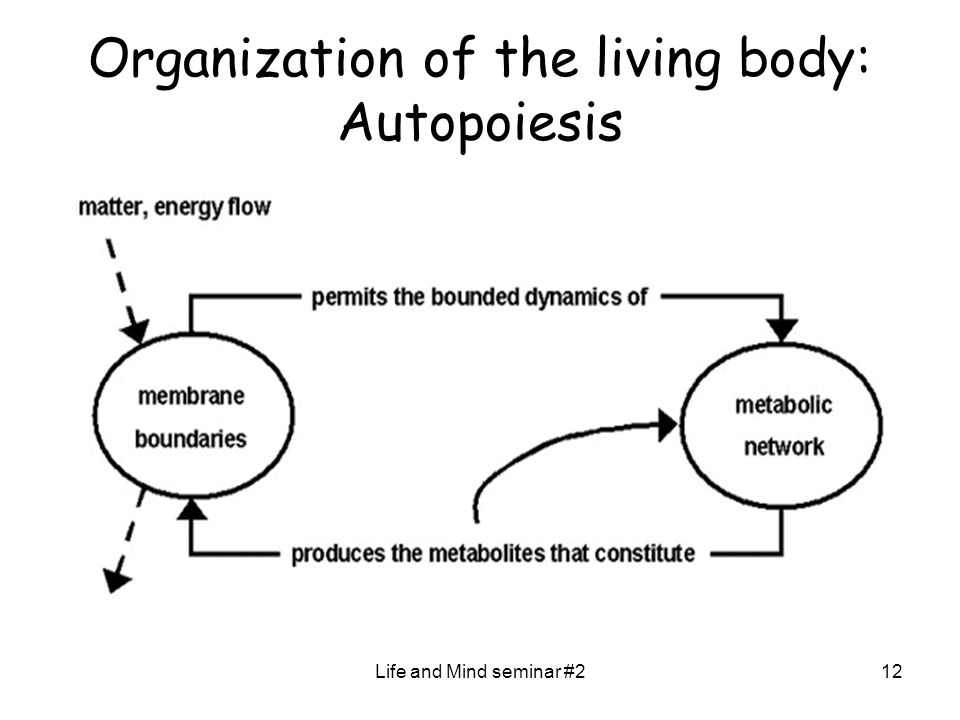 Life and Mind seminar #212 Organization of the living body: Autopoiesis
