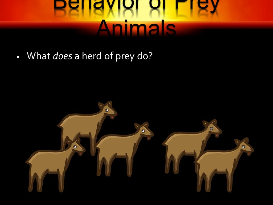 What does a herd of prey do