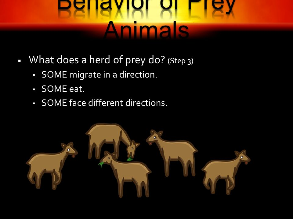 What does a herd of prey do. (Step 3) SOME migrate in a direction.