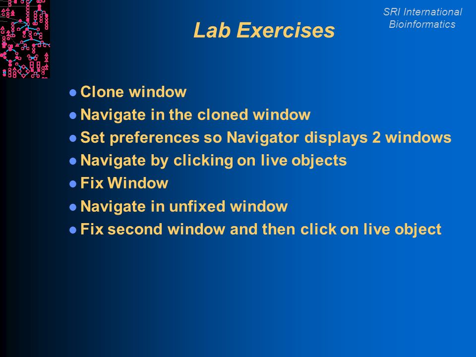 SRI International Bioinformatics Lab Exercises Clone window Navigate in the cloned window Set preferences so Navigator displays 2 windows Navigate by clicking on live objects Fix Window Navigate in unfixed window Fix second window and then click on live object