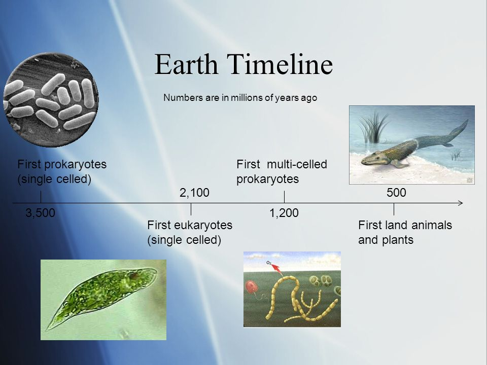 Earth Timeline First prokaryotes (single celled) First eukaryotes (single celled) First multi-celled prokaryotes First land animals and plants 3,500 2,100 1,200 500 Numbers are in millions of years ago